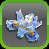 Flowers-Icon-160x160